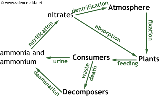 Nutrient Cycles Recycling in Ecosystems The Carbon and Nitrogen – Nutrient Cycle Worksheet