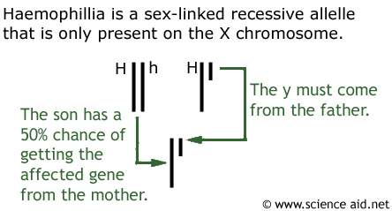 inheritance of haemophillia
