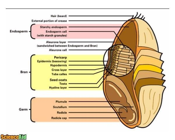 a look at the three main parts of the ear and its uses Humans, while not able to echolocate, make use of minute differences in the time of arrival of a sound in one ear as compared to the other in order to gauge its direction, as we will the ear has three main parts as a result, sounds which come from above our heads seem slightly different than sounds coming from below.