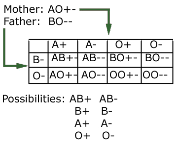 example of comdominance in blood groups