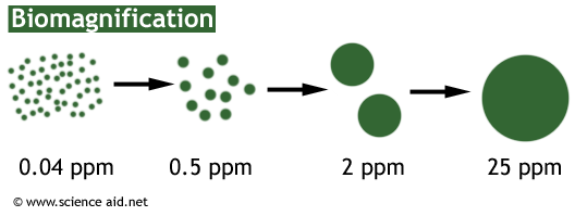 diagram of biomagnification of pesticides
