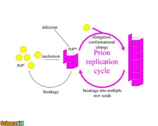 Replication 26015.jpg