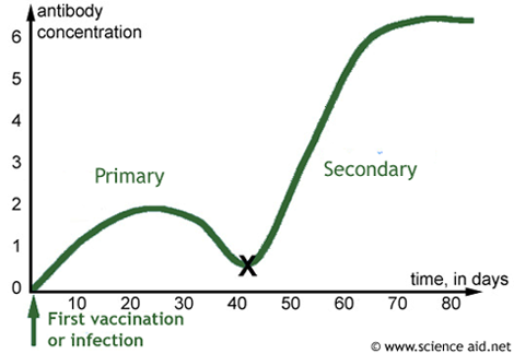 graph of primary and secondary responses