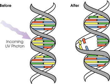 dna Mut.png