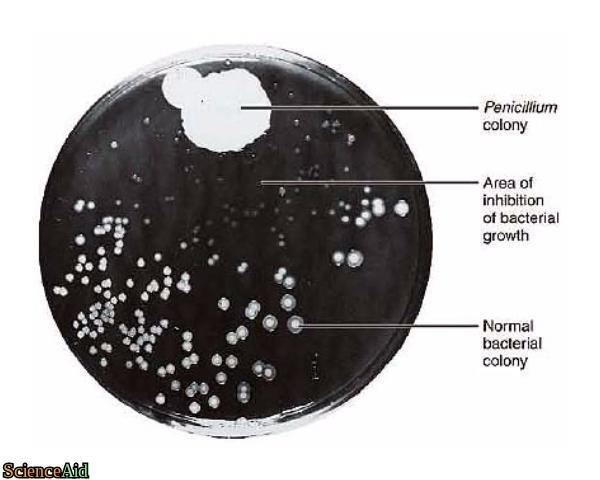 what are antibiotics made of