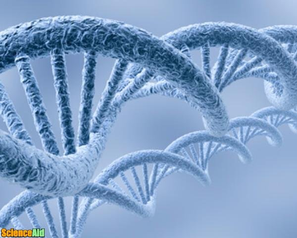 Genome project 42838.jpg