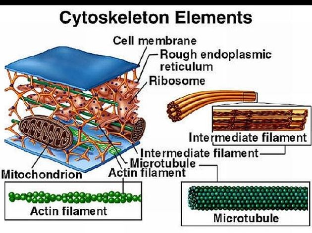 what organelle makes lipids and steroids