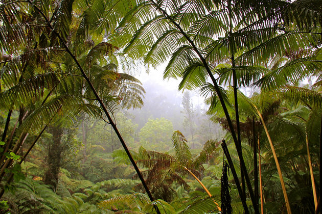 Tropical rain forest, man!.jpg
