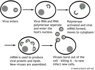 viruses and infection: structure, transmission, avoiding disease -  scienceaid