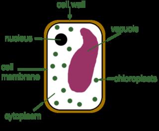 Plant cells - ScienceAid